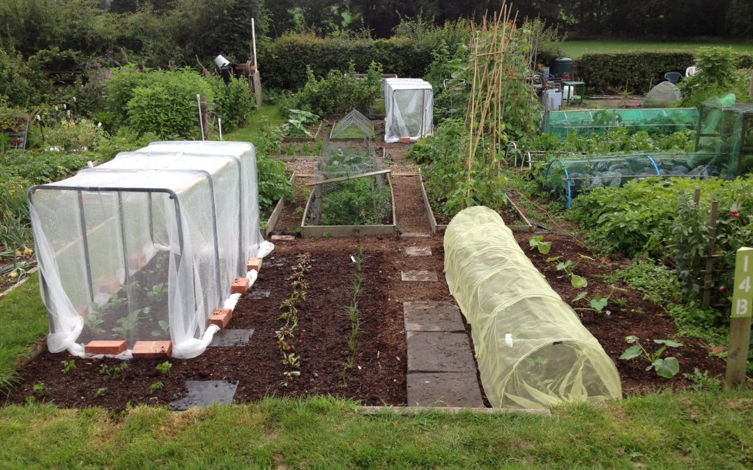 Allotment Update!